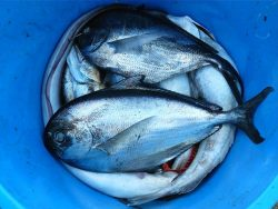 Aquaculture Course Online.