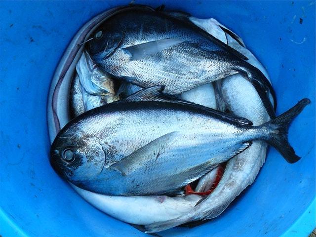Aquaculture Course Online.