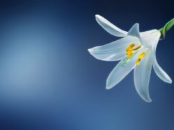 Botany Course Online