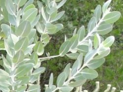 Eucalyptus Course Online