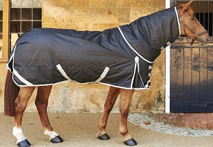 Horse Care Course Online.