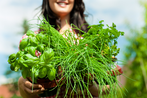 Introduction Herbs Course Online