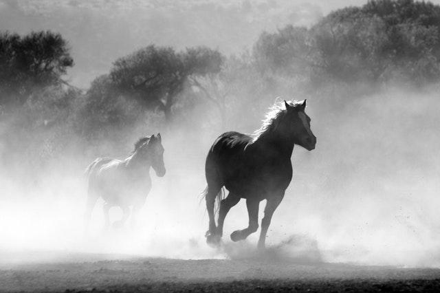 Horse Behaviour Psychology Course