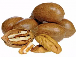 Learn to Grow Nuts
