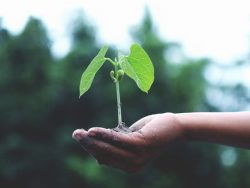Plant Cutting Propagation Course Online
