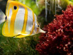 Marine Biology Course Online.