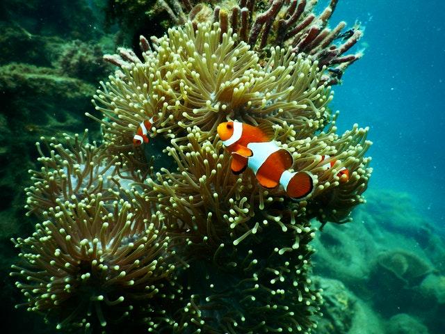 Marine Biology Course Online