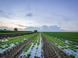 Soil for Crops Course Online