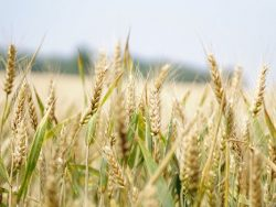 Agronomy Course Online