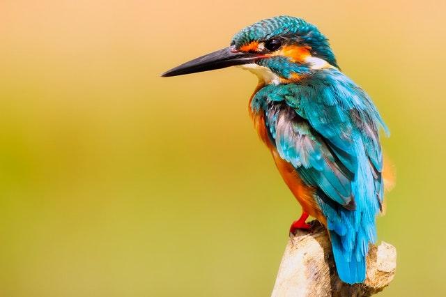 Ornithology Bird Course Online