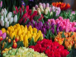 Cut Flower Bulbs Course Online