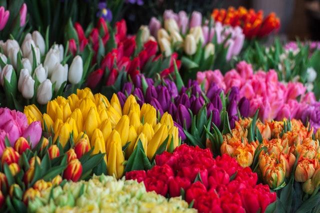 Cut Flower Bulbs Course Online