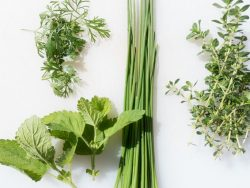Culinary Herbs Course Online