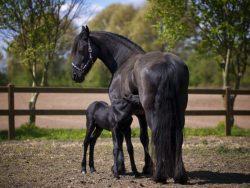 Horse Breeding Course Online