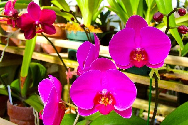 Orchids Course
