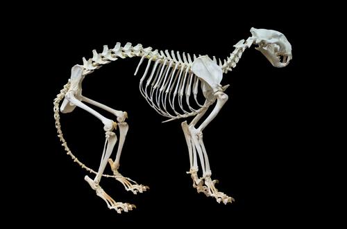 Vertebrate Zoology Course Online