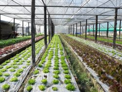 Commercial Hydroponics Course Online