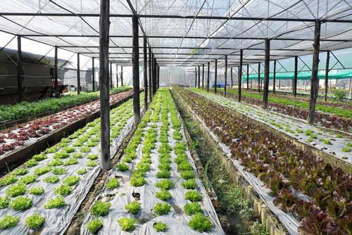 Organic Farming Course Online