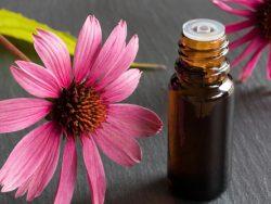 Medicinal Herbs Course Online
