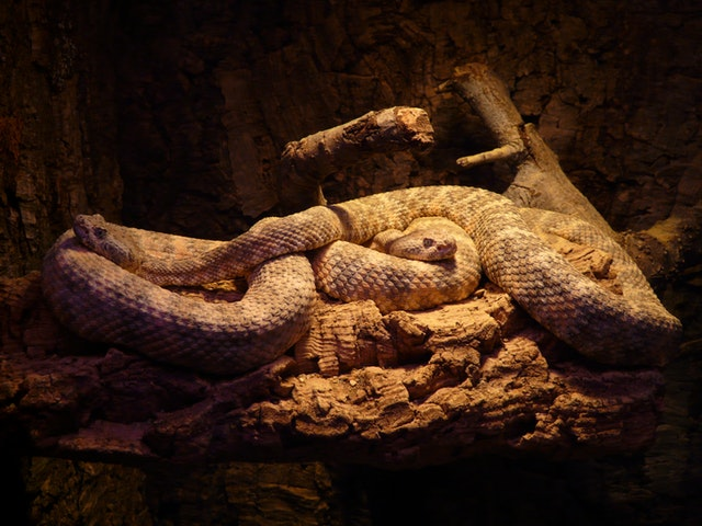 Herpetology Course Online