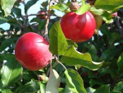 Fruit Growing Course Online