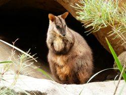 Wildlife Courses Online