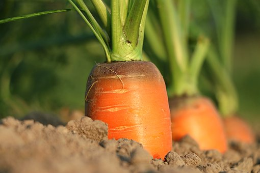 Vegetable Growing Course Online