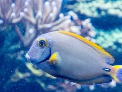 Advanced Certificate in Marine Biology Course Online
