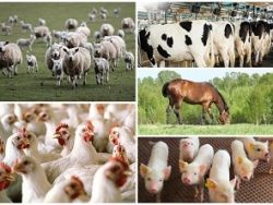 Advanced Certificate in Animal Husbandry Course Online