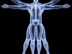 Advanced Certificate in Anatomy and Physiology Course Online