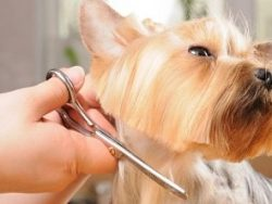 Animal Grooming Course Online