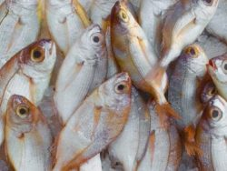 Advanced Certificate in Aquaculture Course Online