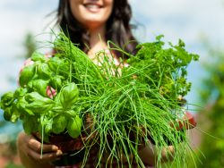 Advanced Certificate in Herb Production Course Online
